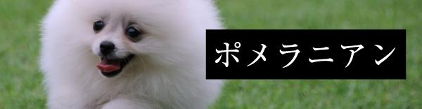 取扱い犬種:ポメラニアン