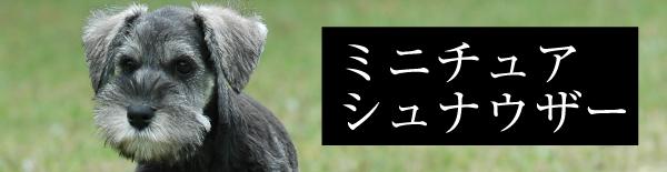 取扱い犬種:ミニチュアシュナウザー
