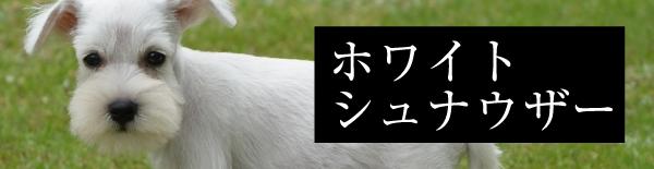 取扱い犬種:ホワイトシュナウザー