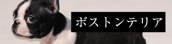 取扱い犬種:ボストンテリア